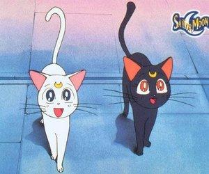cat, sailor moon, and artemis image