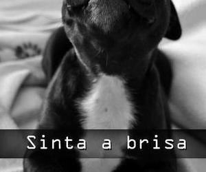 dog, cute, and sinta a brisa image
