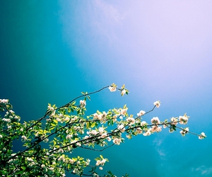 flower, italy, and sky image