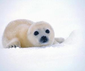 seal, snow, and animal image