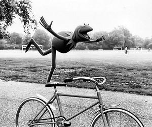 bicicleta, equilibrio, and rana gustavo image