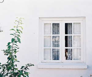 window, white, and photography image