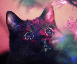 adorable, black cat, and christmas image