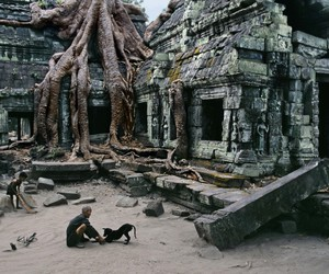 steve mccurry, dog, and photography image
