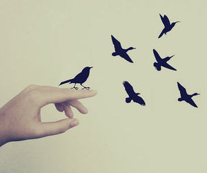 bird, fly, and hand image
