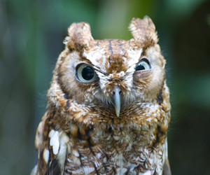 owl, funny, and nature image