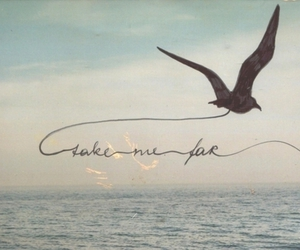 bird, sea, and quote image