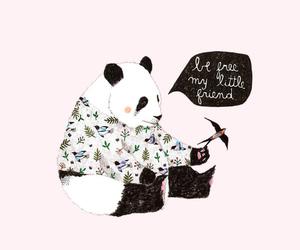 panda, bird, and free image
