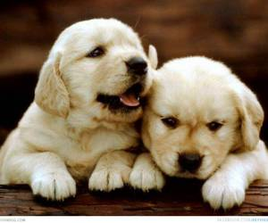 cute animals and puppies image
