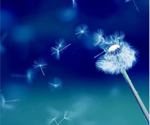 dandelion, flowers, and blue image