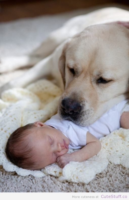 54 images about dogs on We Heart It | See more about dog