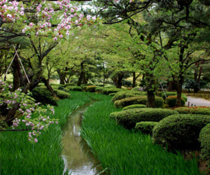 beautiful and green image