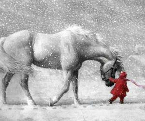 beautiful, horses, and ponies image