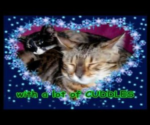 cat, cats, and christmas image