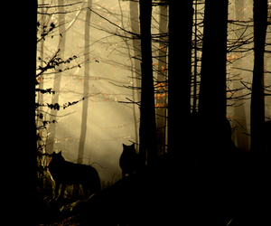 wolf, forest, and nature image