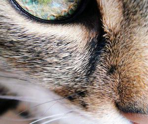 cat, animal, and eye image
