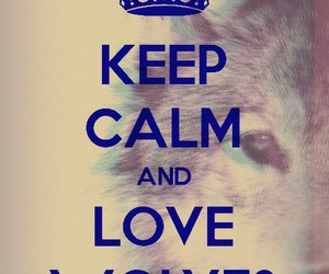 wolf, keep calm, and wolves image