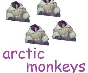 arctic monkeys, funny, and poor monkey image