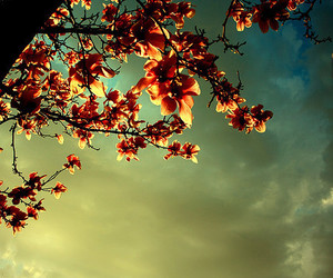 sky, tree, and flowers image