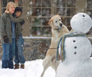 marley and me, dog, and movie image