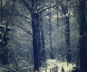 beautiful, forest, and winter image