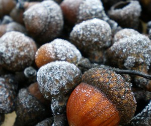 acorn, autumn, and fall image