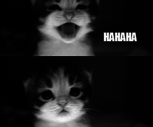 cat, no, and funny image