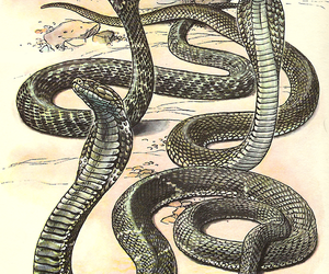 draw, illustration, and snakes image