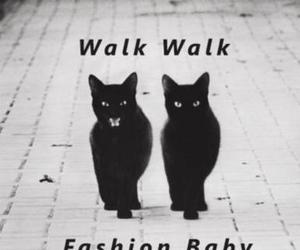 cat, fashion, and walk image