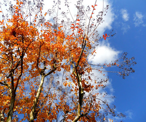 autumn, beauty, and clouds image