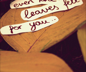 leaves and love image