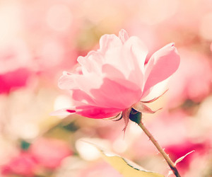 flowers, pink, and plant image