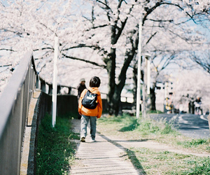 japan, boy, and cherry blossom image