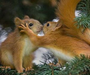 squirrel, animal, and kiss image