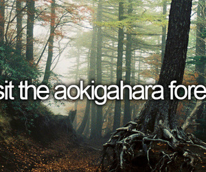 forest, travel, and bucket list image