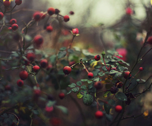 nature, berries, and green image