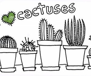 cactuses image