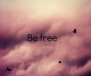 be free, birds, and free image