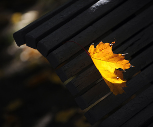 autumn, bench, and leaves image