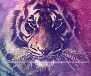 tiger, galaxy, and triangle image