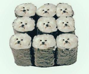 sushi, dog, and food image