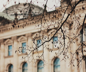 tree, photography, and building image