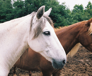 horses, nature, and animal image