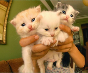 baby, cat, and cats image