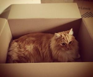 cat, tom fletcher, and Marvin image