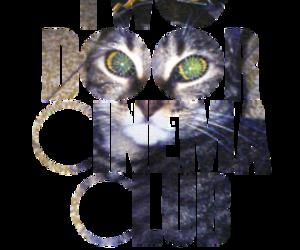 cat, music, and two door cinema club image