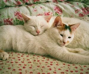 animals, quero, and cat image
