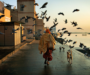 bird, dog, and travel image