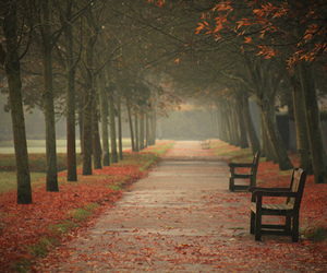 autumn, benches, and fallen leaves image