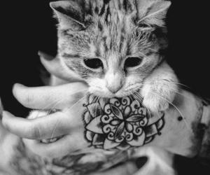cat, tattoo, and black and white image